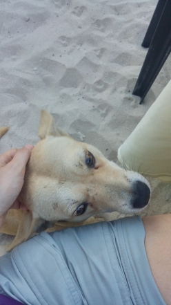 Stray dog we named Frank