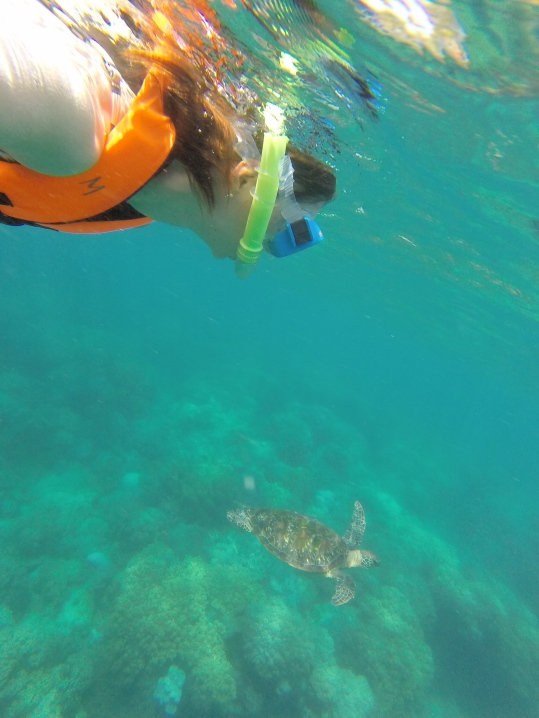 Snorkeling with turtles!