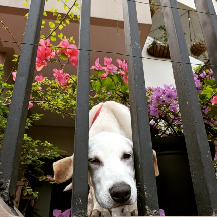 Maya the sweetest dog!